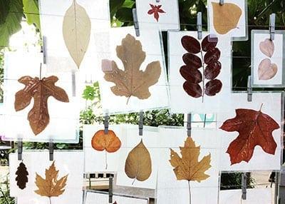 Huntington Children's Workshop: Treetective