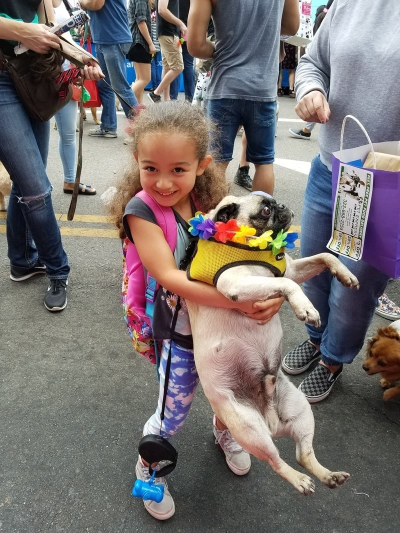 Glassell Bark Community Block Party and Rescue Adoption
