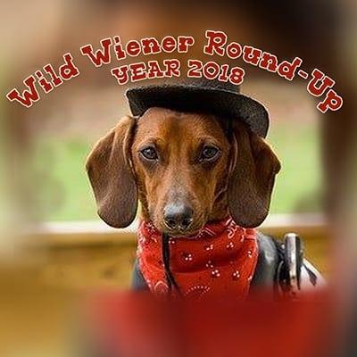 Wild Wiener Round-Up Races