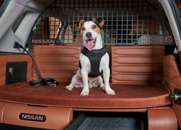 """Dog Days of Summer"" Pet Adoption Event"