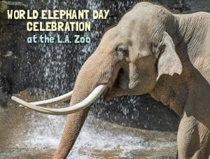 World Elephant Day Celebration at the L.A. Zoo
