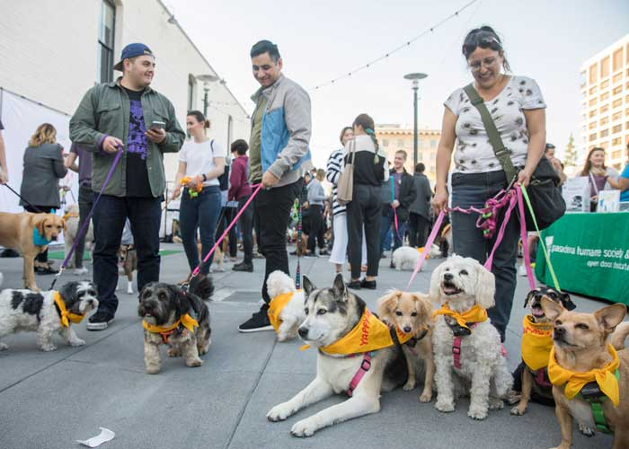 Old Pasadena Yappy Hour