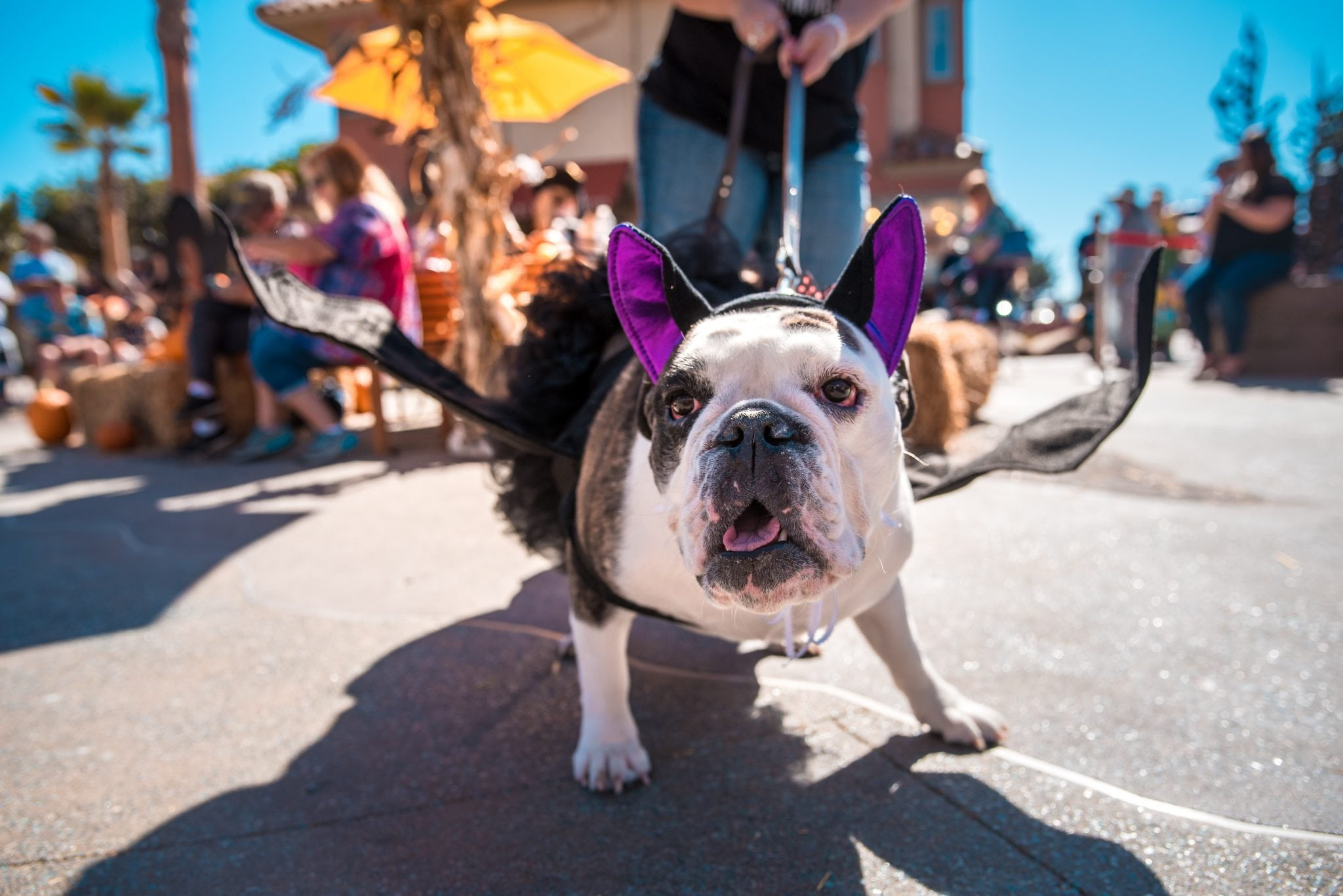 Ventura Harbor Village 6th Annual HOWL-O-WEEN Pet Costume Contest