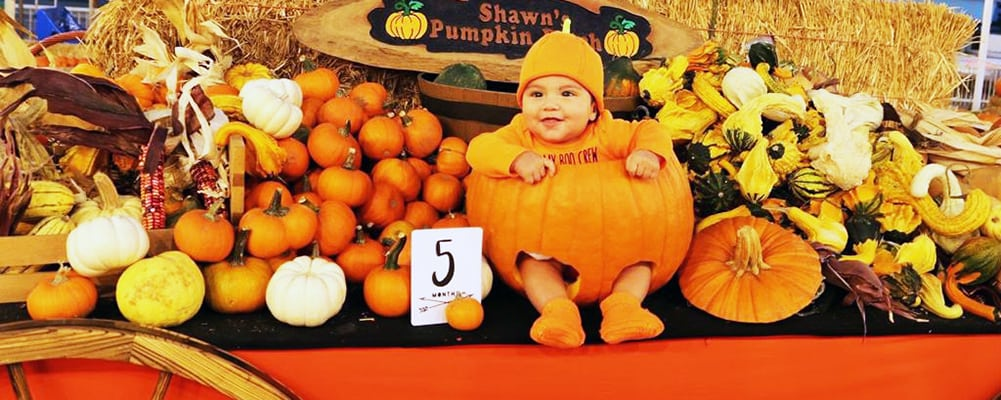 Shawn's Pumpkin Patch