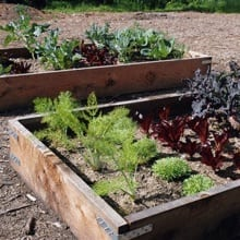Huntington Children's Workshop: My First Garden Box