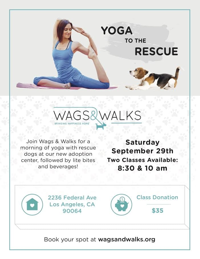 Wags & Walks Yoga to the Rescue