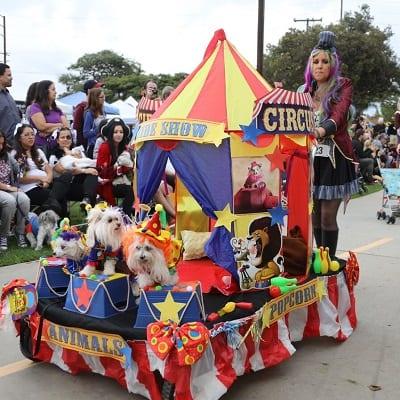 dog parades