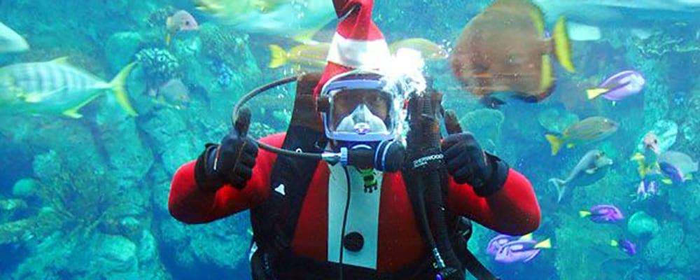 Aquarium Holidays