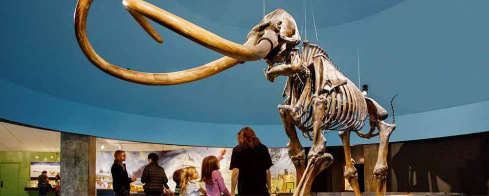 Mammoths and Mastodons at the La Brea Tar Pits