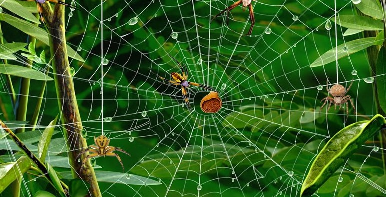The Incredible World of Spiders