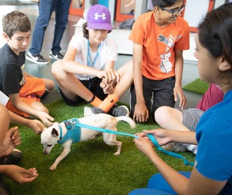 Wallis Annenberg PetSpace's Special Programming
