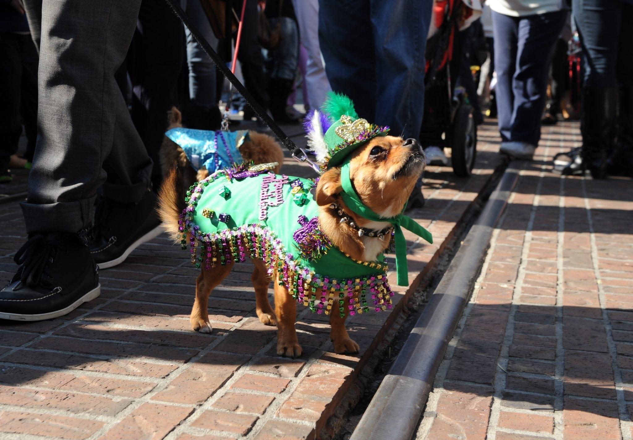 Farmers Market Mardi Gras Celebration