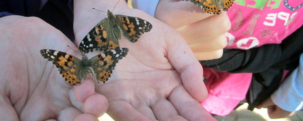 Kidspace's Butterfly Celebration