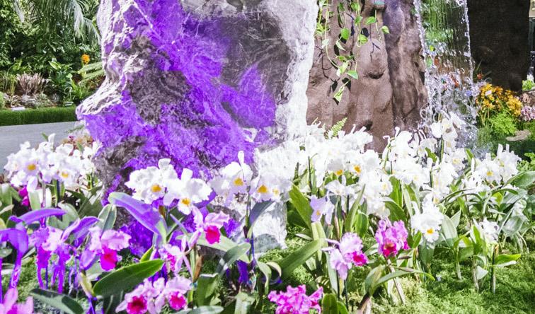 Santa Barbara International Orchid Show