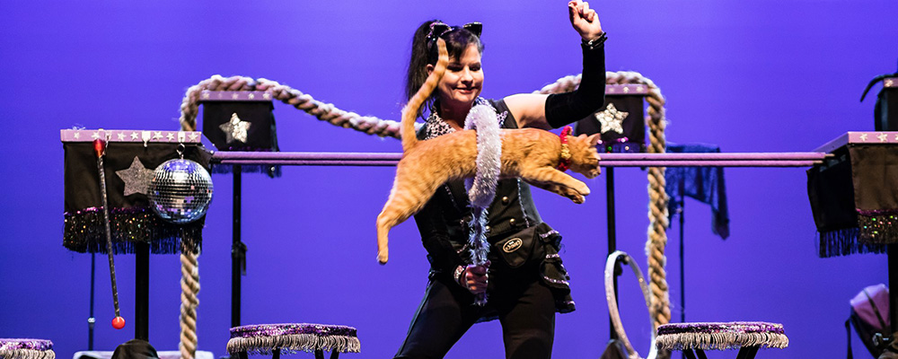 The Amazing Acro-cats! Starring The Rock Cats!