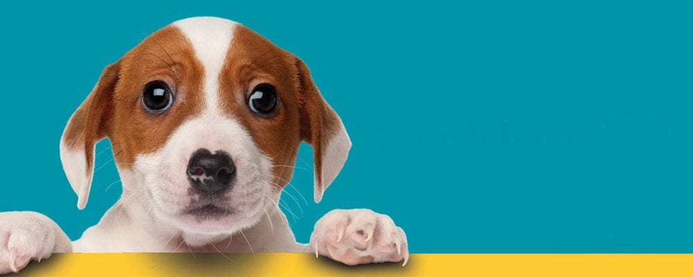 Dogs! A Science TailExhibit