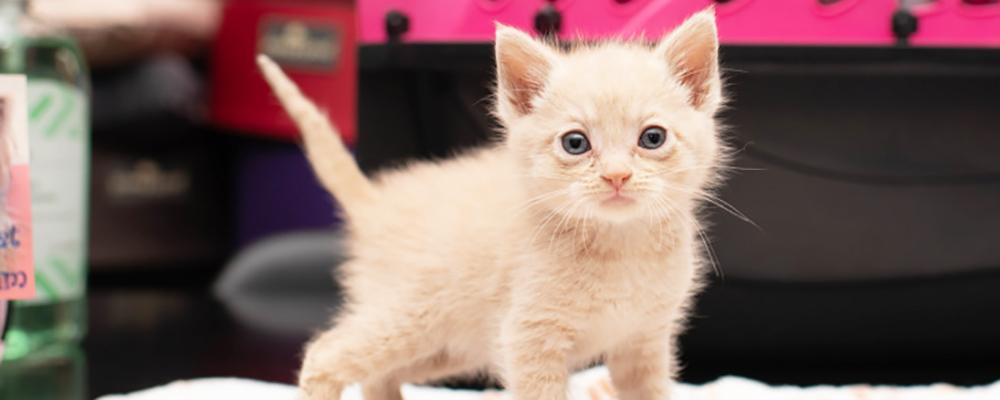 Tiny Beans Pop Up Kitten Lounge