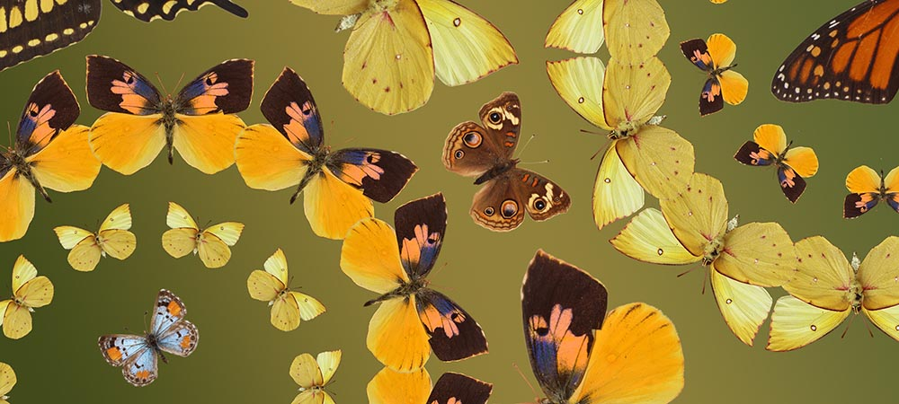 California Butterfly Pavilion