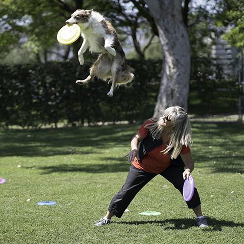 dog festivals in la