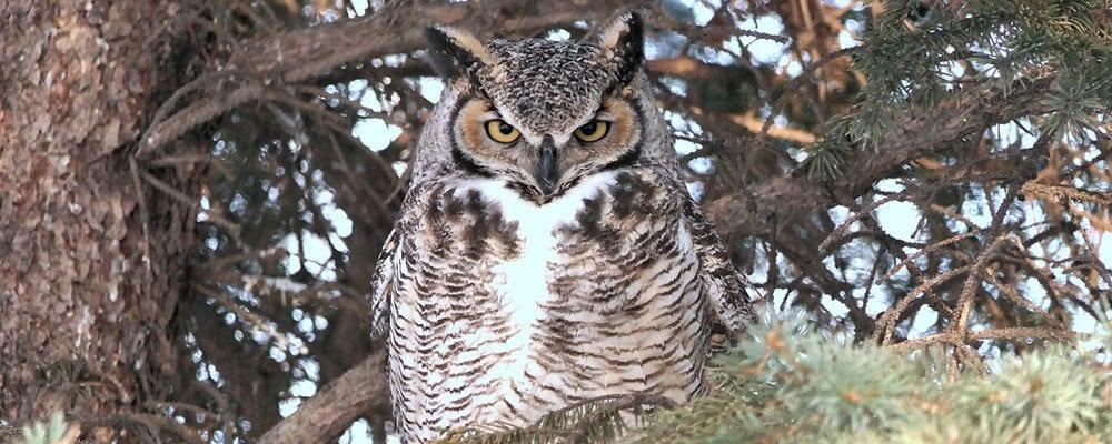 Huntington Family Evening: Night Owls