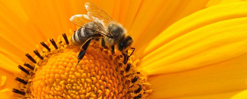 We Love Bees Festival