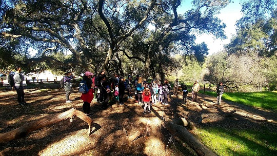 Stories and Songs of the Elfin Forest