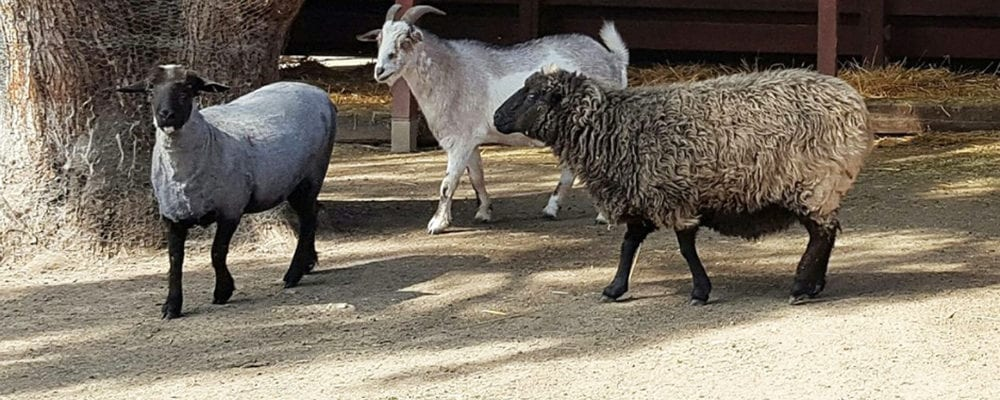 Cool Craft Roundup at the Rancho: Baa Baa Black Sheep