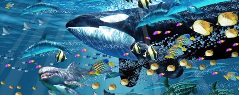 John Enright Exhibit at Aquarium of the Pacific