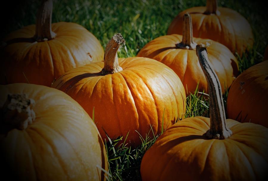 Night In The Garden: Pumpkin Hunt At Night