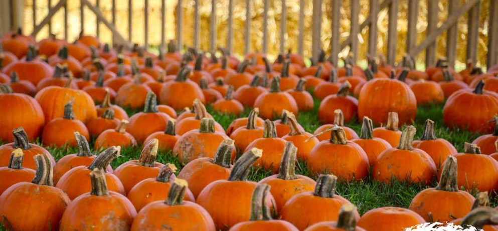 Santa Anita's Pumpkin Patch & Fall Fun Fest