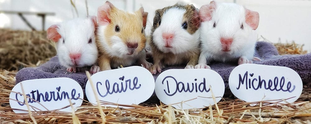 Los Angeles Guinea Pig Rescue Fall Festival