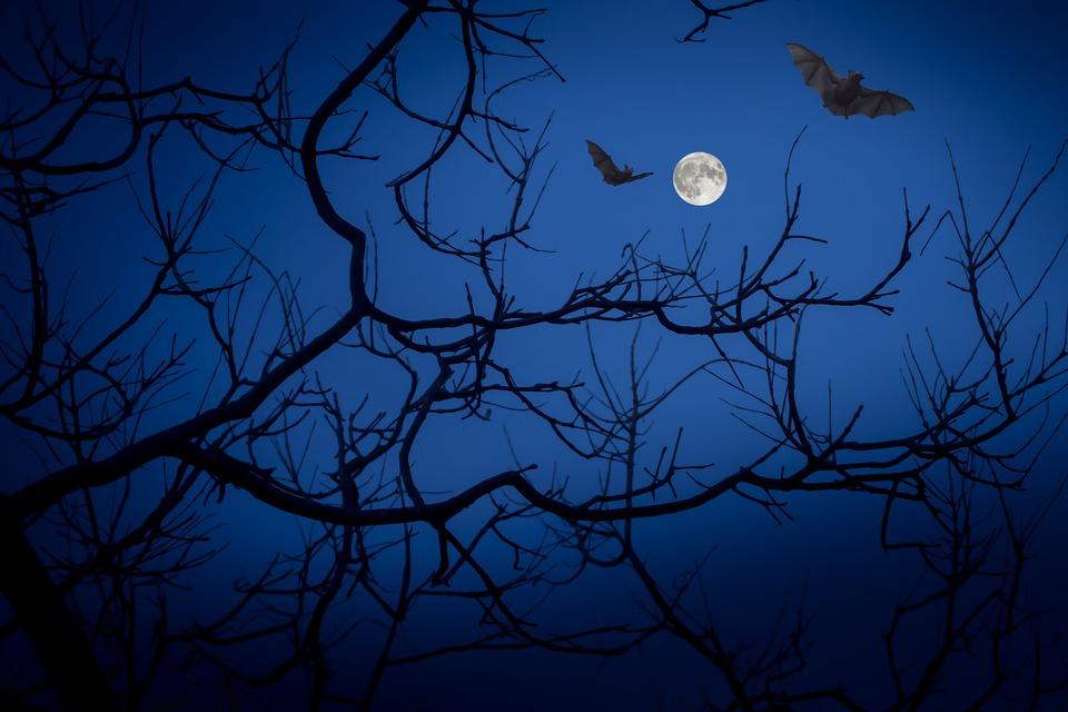Family Adventure Night Hike: Ghoulish Garden