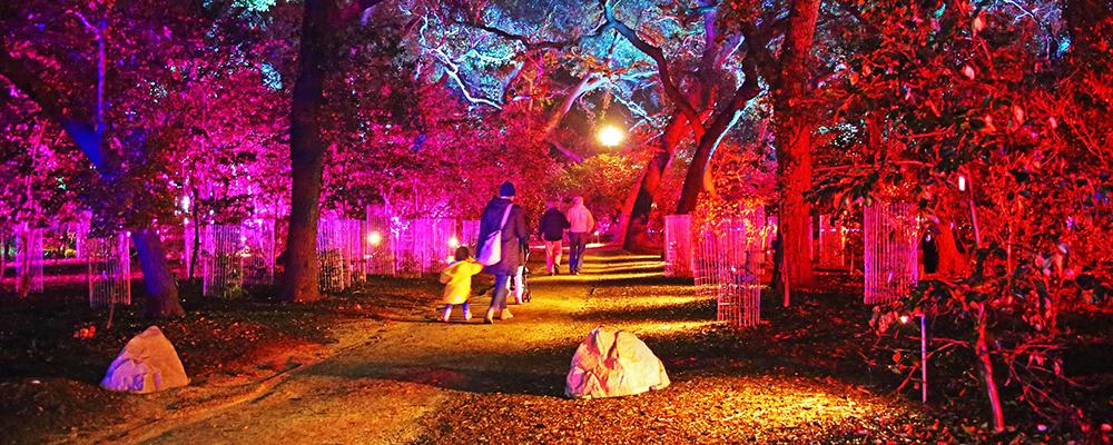 Enchanted 2019 Slider - Forest Of Light Descanso Gardens December 15