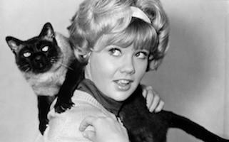 Hammer Family Flicks Film Series: That Darn Cat