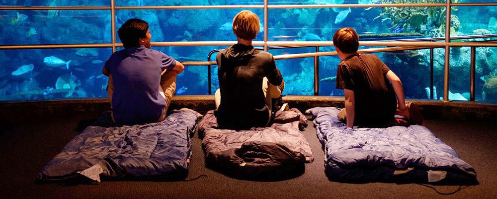 Aquarium Of The Pacific's Winter Family Overnight