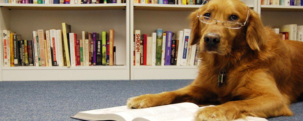Barks and Books