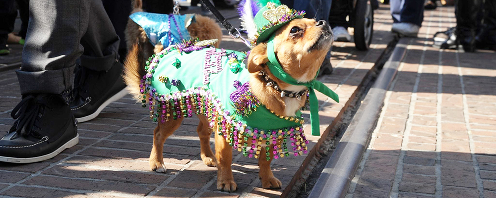 Farmers Market Mardi Gras Celebration