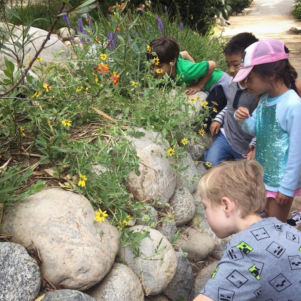 Best L.A. gardens for kids: Mathias  botanical garden at UCLA