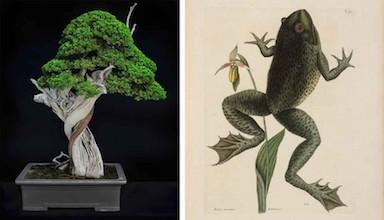 Lifelines/Timelines: Exploring The Huntington's Collections Through Bonsai Exhibition