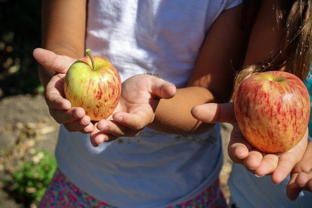 Nature activities apple crisp
