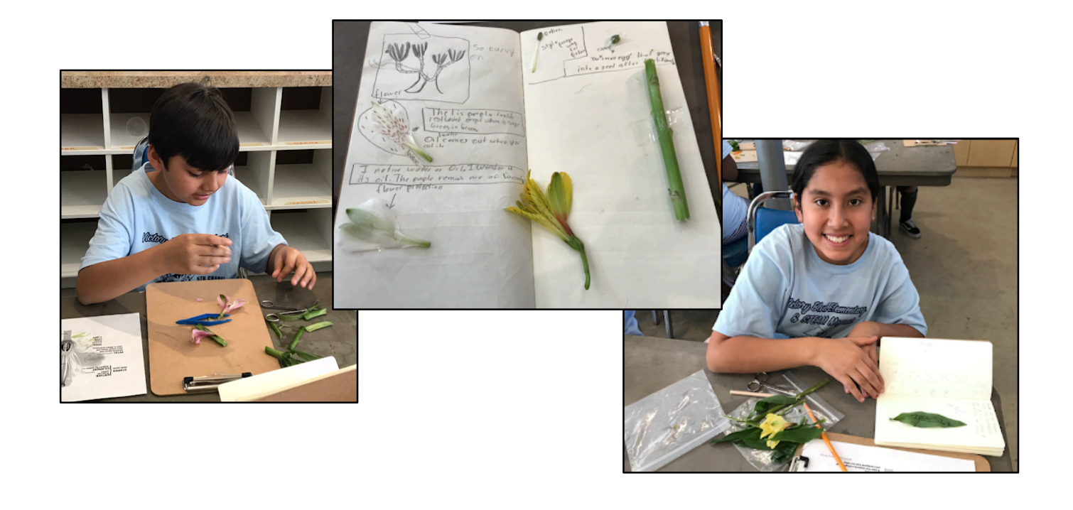 Arboretum At-Home Nature Adventures: Flower Dissection