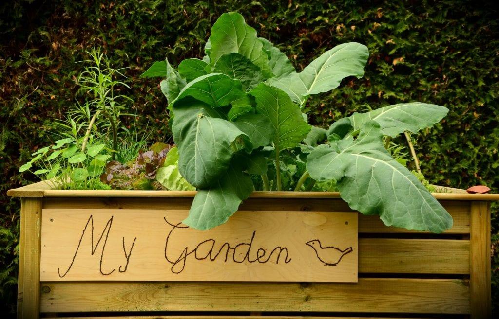 a garden at home