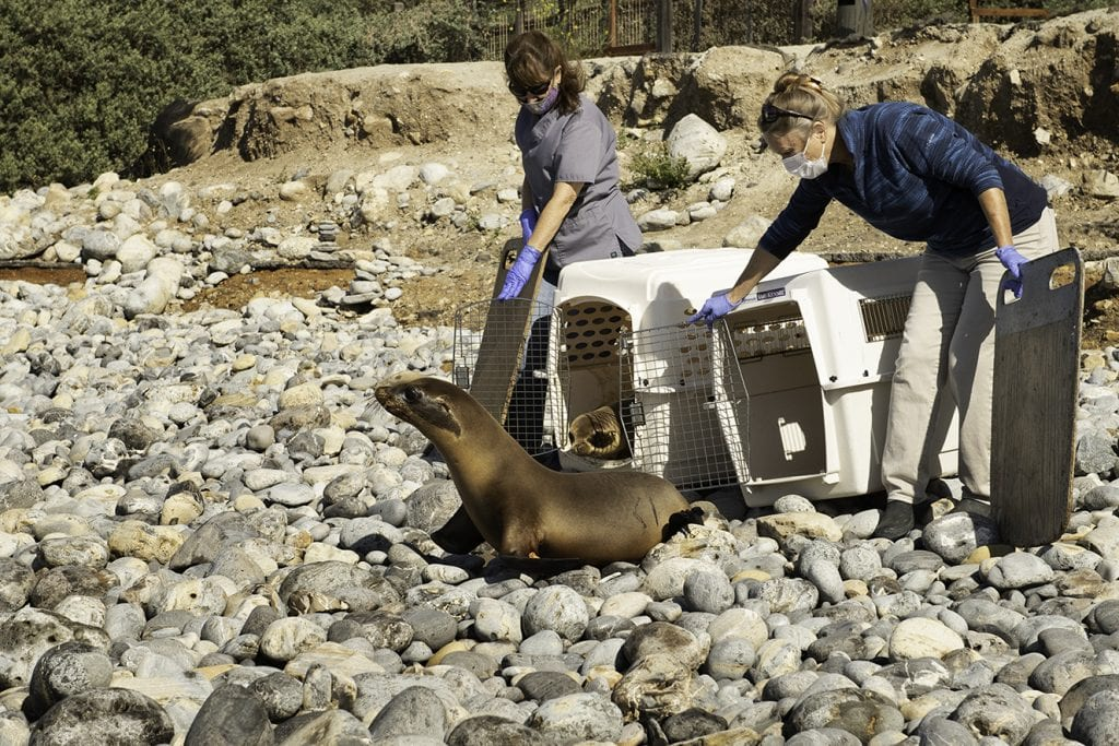 sea lions rescued