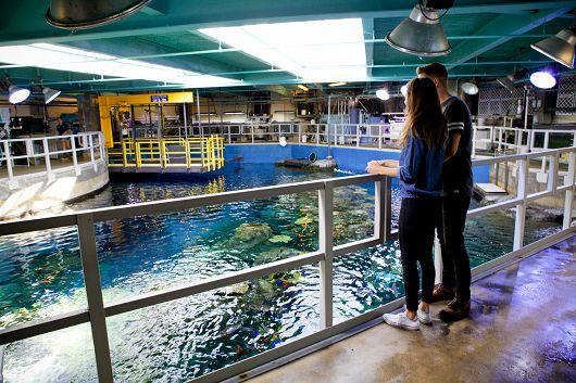 Aquarium of the Pacific Behind the Scenes Tour