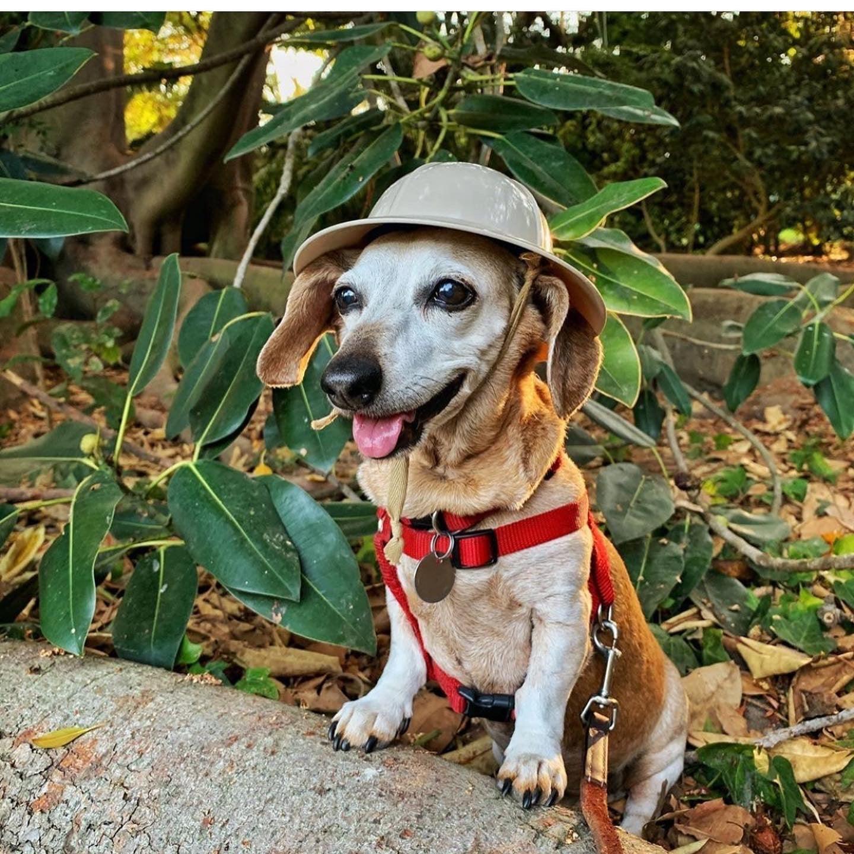 South Coast Botanic Garden Dog Walking Days