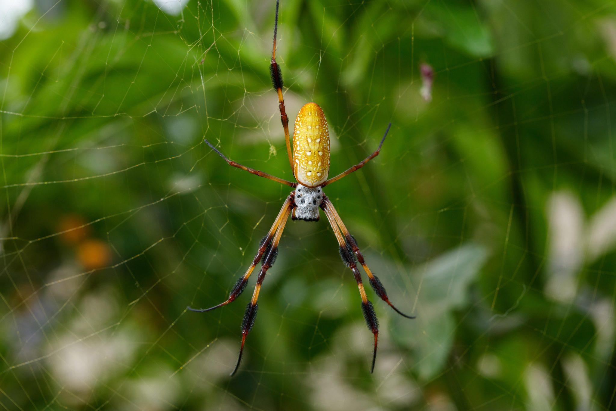 Spider Pavilion