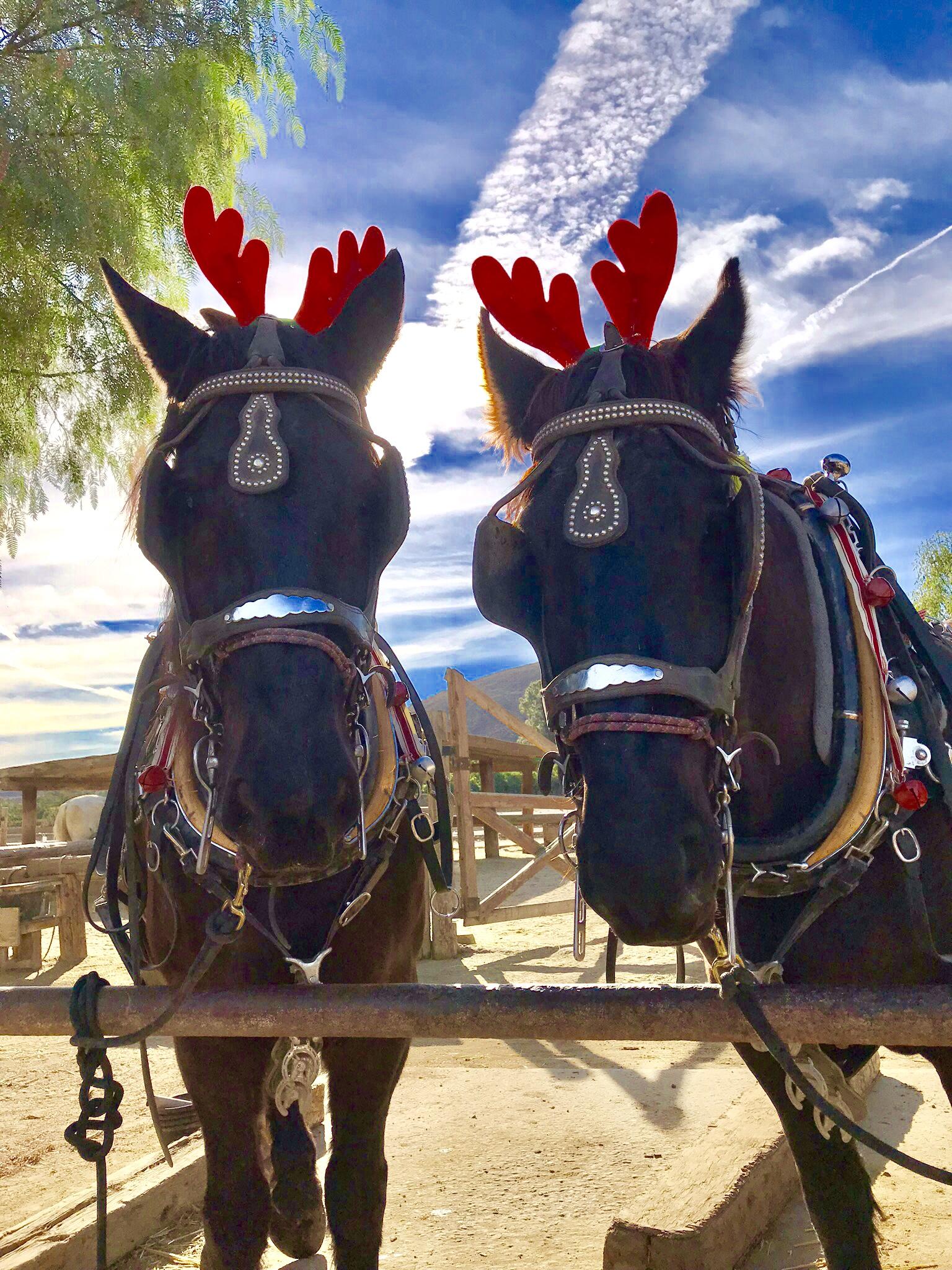 Underwood Christmas on the Farm