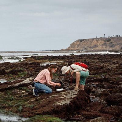 NHM Talk: Floating Forests and Amazing Algae