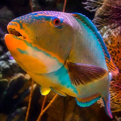 Aquarium Animals After Dark