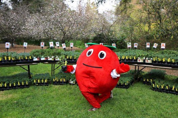 Tomatomania at Descanso Gardens